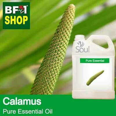 Pure Essential Oil (EO) - Calamus Essential Oil - 5L