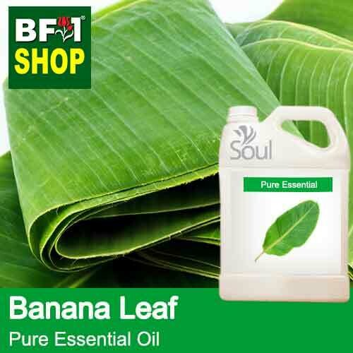 Pure Essential Oil (EO) - Banana Leaf Essential Oil - 5L