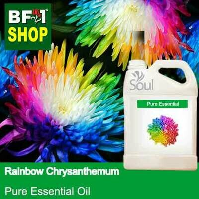 Pure Essential Oil (EO) - Chrysanthemum - Rainbow Chrysanthemum Essential Oil - 5L