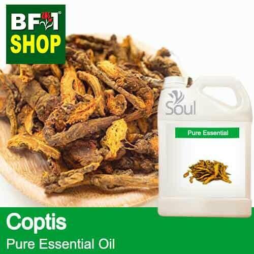 Pure Essential Oil (EO) - Coptis (Coptis Japonica) Essential Oil - 5L