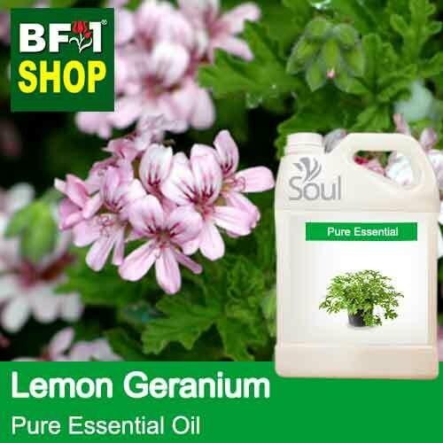 Pure Essential Oil (EO) - Geranium - Lemon Geranium Essential Oil - 5L