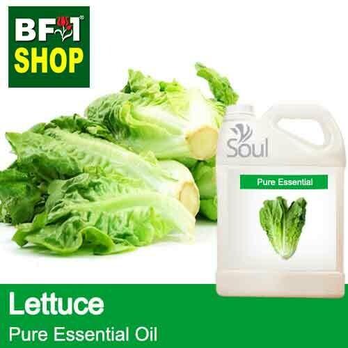 Pure Essential Oil (EO) - Lettuce Essential Oil - 5L