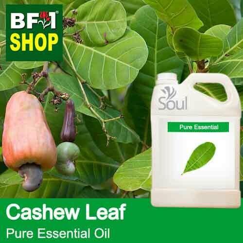 Pure Essential Oil (EO) - Cashew Leaf ( Anacardium Occidentale ) Essential Oil - 5L