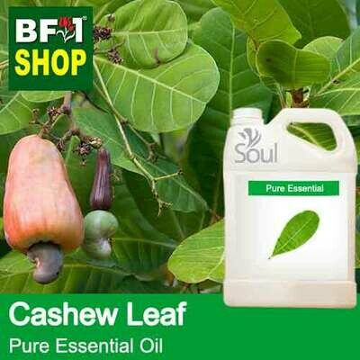 Pure Essential Oil (EO) - Cashew Leaf ( Anacardium Occidentale ) Essential Oil - 5L