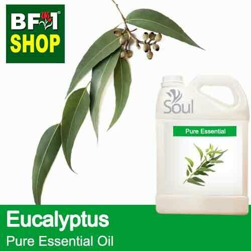 Pure Essential Oil (EO) - Eucalyptus Essential Oil - 5L