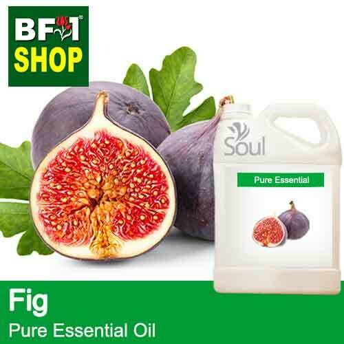 Pure Essential Oil (EO) - Fig Essential Oil - 5L