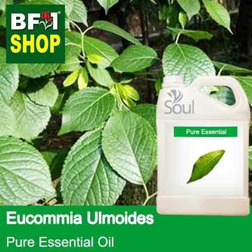 Pure Essential Oil (EO) - Eucommia Ulmoides Leaf Essential Oil - 5L