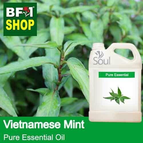 Pure Essential Oil (EO) - Mint - Vietnamese Mint ( Persicaria Odorata ) Essential Oil - 5L