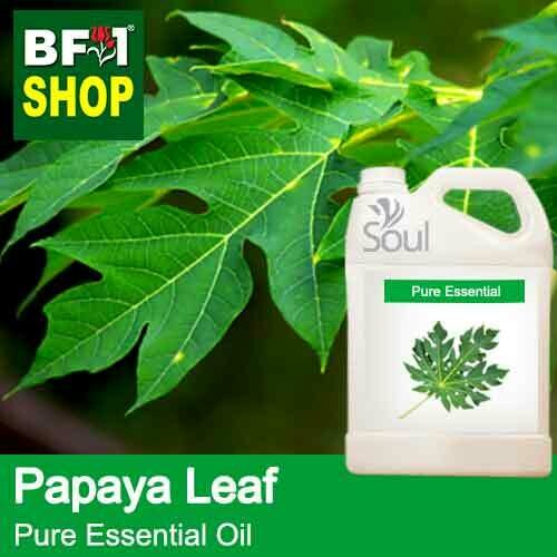 Pure Essential Oil (EO) - Papaya Leaves Essential Oil - 5L