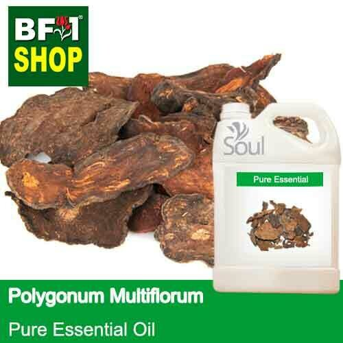 Pure Essential Oil (EO) - Polygonum Multiflorum Essential Oil - 5L