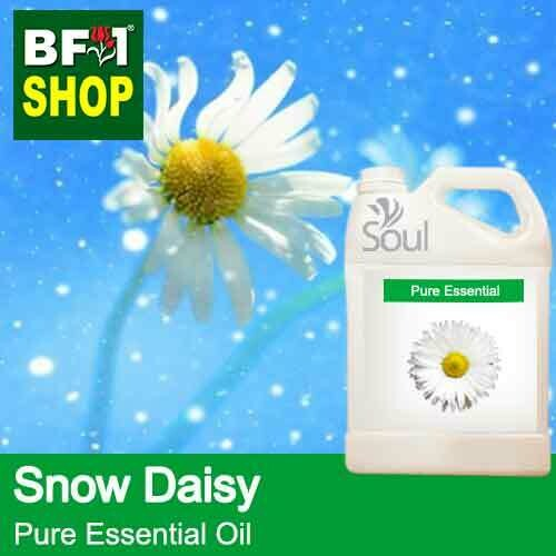 Pure Essential Oil (EO) - Snow Daisy Essential Oil - 5L