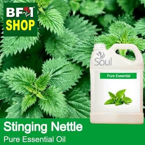Pure Essential Oil (EO) - Stinging Nettle Essential Oil - 5L