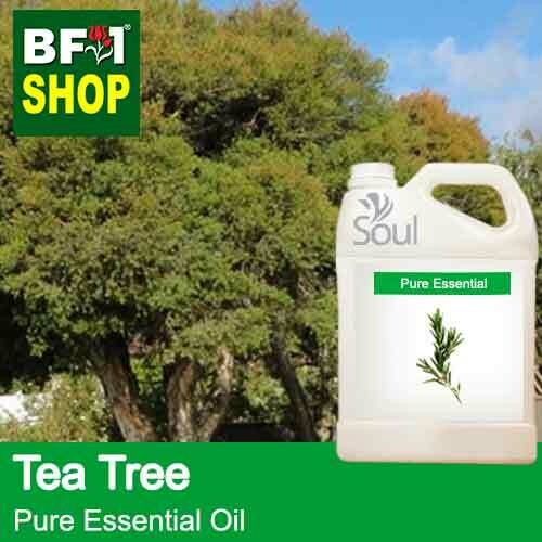 Pure Essential Oil (EO) - Tea Tree Essential Oil - 5L