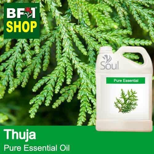 Pure Essential Oil (EO) - Thuja Essential Oil - 5L