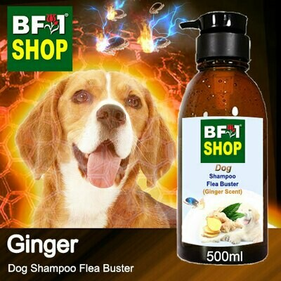 Dog Shampoo Flea Buster (DSO-Dog) - Ginger - 500ml ⭐⭐⭐⭐⭐