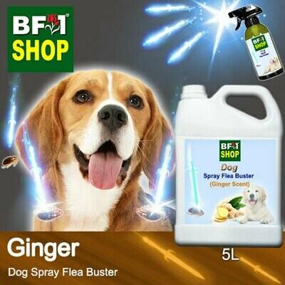 Dog Spray Flea Buster (DSY-Dog) - Ginger - 5L ⭐⭐⭐⭐⭐