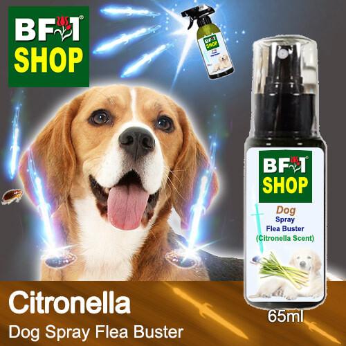 Dog Spray Flea Buster (DSY-Dog) - Citronella - 65ml ⭐⭐⭐⭐⭐