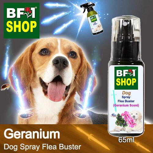 Dog Spray Flea Buster (DSY-Dog) - Geranium - 65ml ⭐⭐⭐⭐⭐