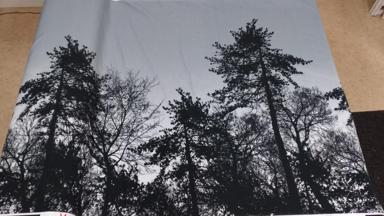 Joustocollege metsä