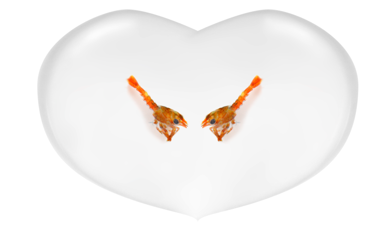Adopt a Lobster - Sweethearts