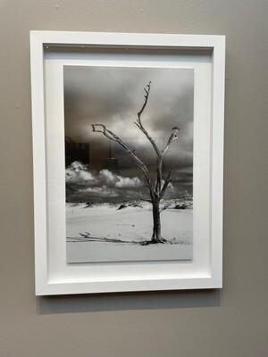 Walter's Island, Carey's Tree by Ryan Steed