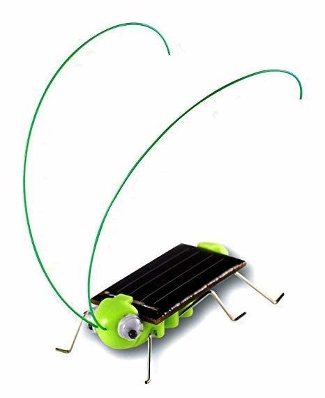Insecta solara