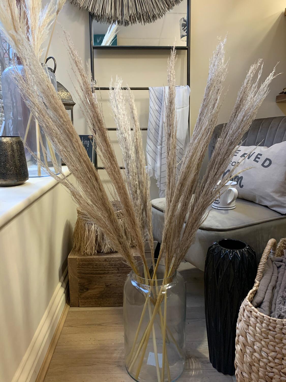 Pampas Grass - Natural - Medium 120cm