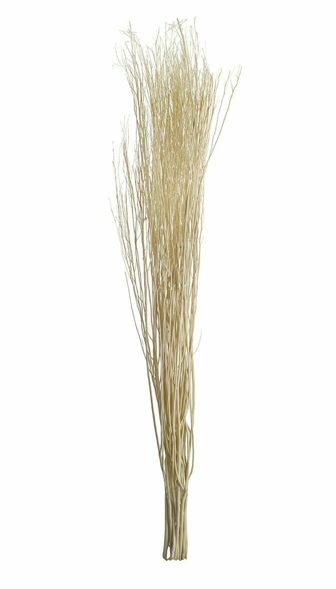 Tall Yanagi Grass
