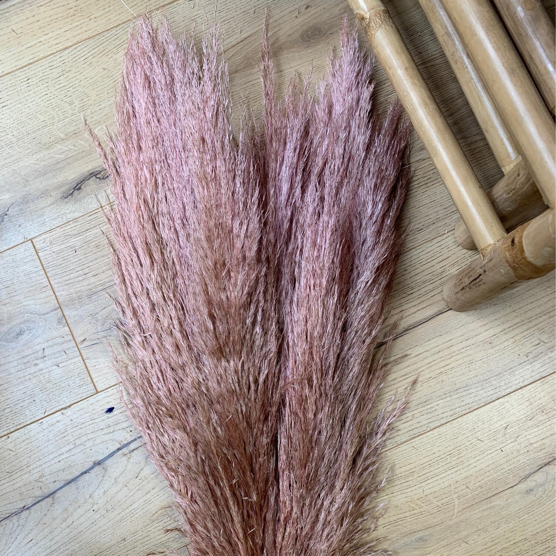 Pampas Grass - Pink