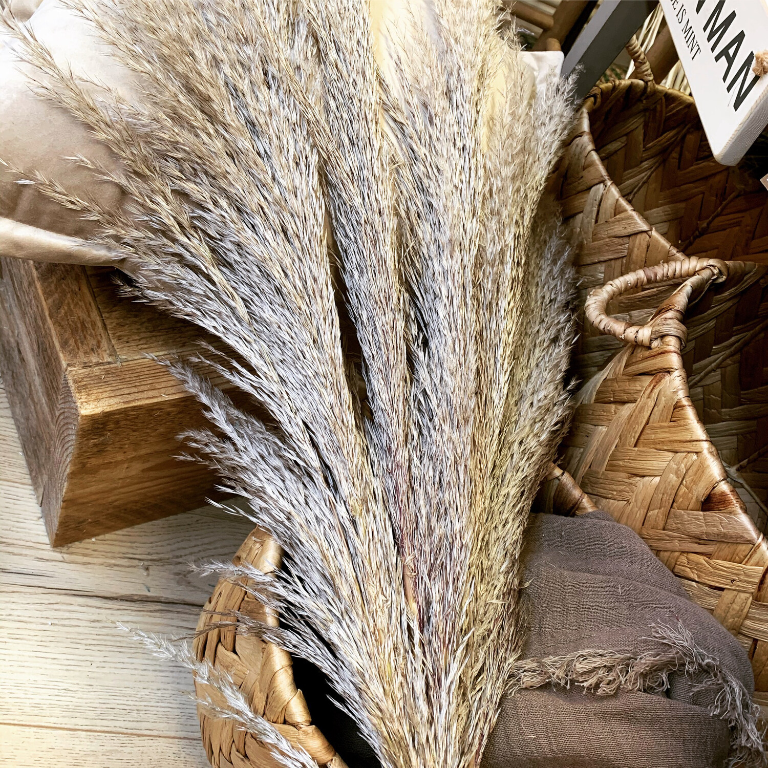 Taupe Pampas - Fluffy