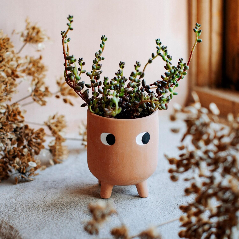 Terracotta succulent pot