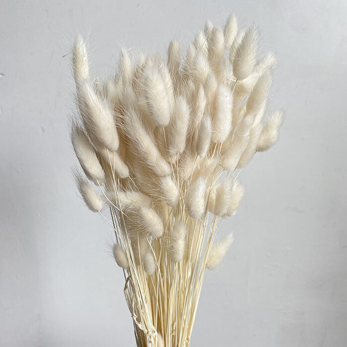 Dried Lagurus - Bunny Tails - Ivory
