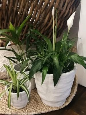 White Render Planter / Pot