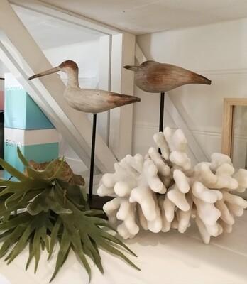 Standing Water Birds