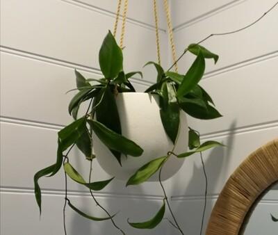 Ceramic Glazed Hanging Planter