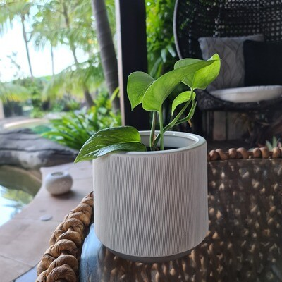 Tapered White Lines Pot