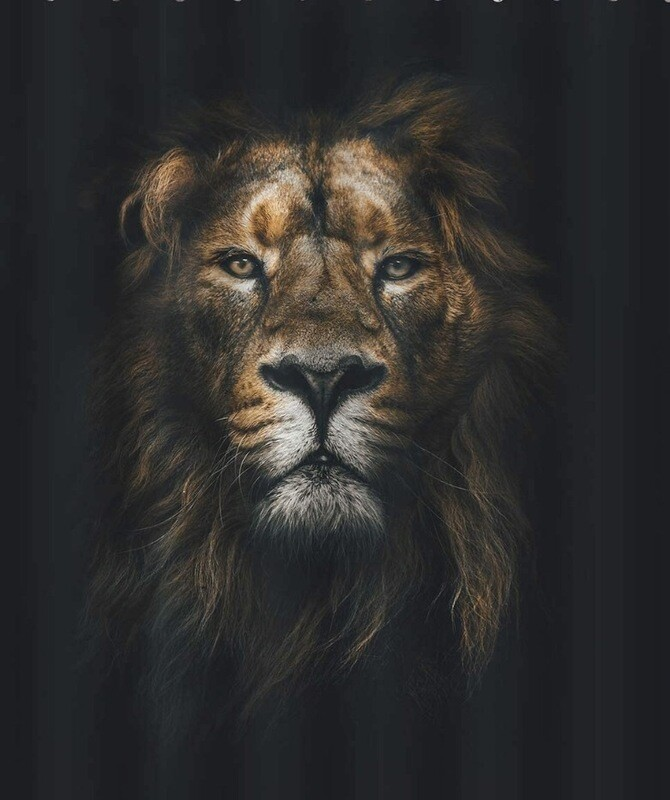 Lion Curtain