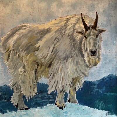 Mountain Goat, oil on canvas, 36x36