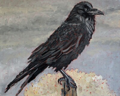 Raven 1, oil on canvas, 16x20