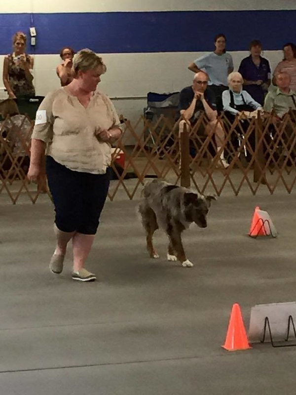 Rally/Obedience