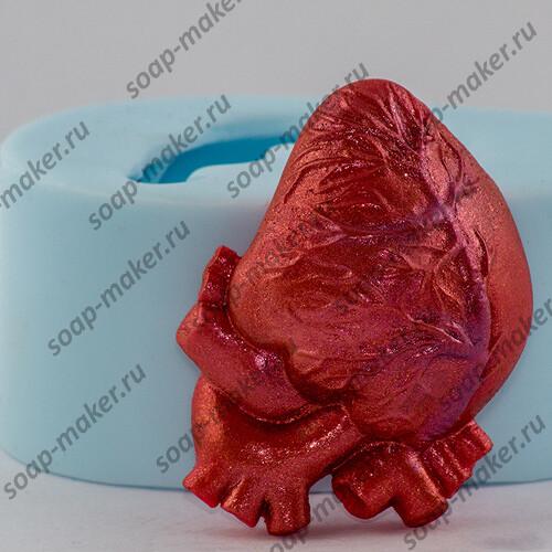 Анатомическое сердце 2D