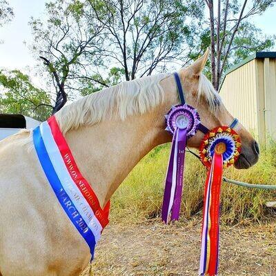 CLASS 28: ONLINE HORSE SHOWING'S ROSETTE MODELS