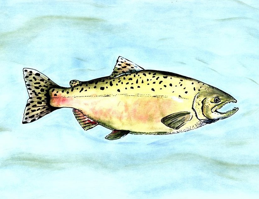 Salmon Notecard Collection - Set of 5 Large Notecards