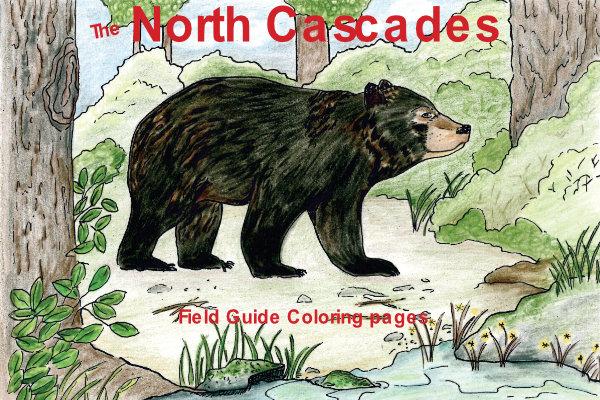 North Cascade Field Guide Coloring Book