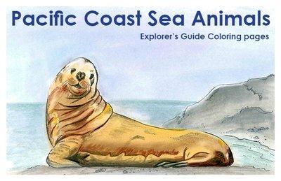 Pacific Coast Sea Animals Explorer's Guide