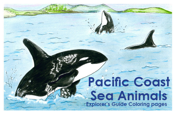 Pacific Coast Sea Animals Explorer's Guide