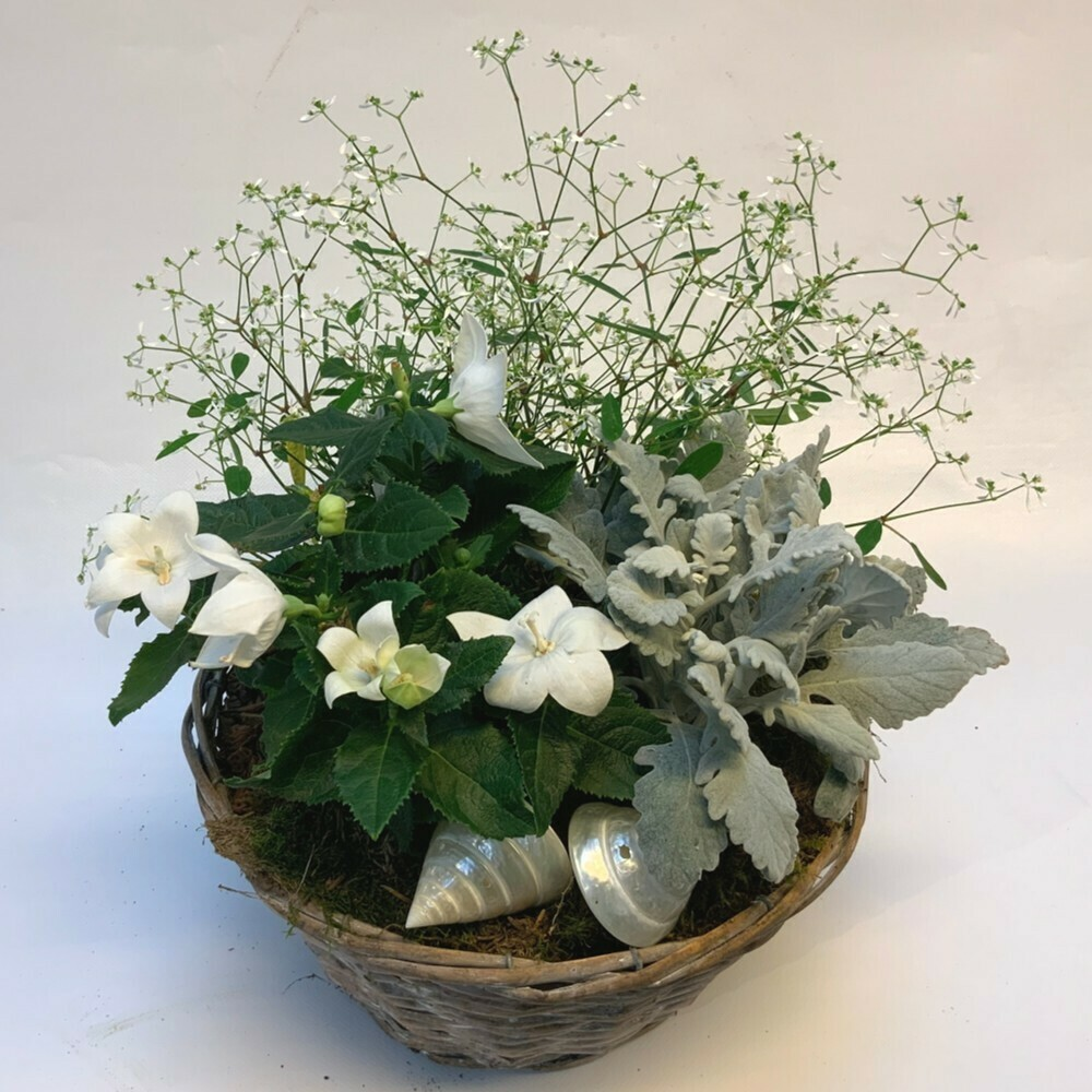 Bepflanztes Gefäss Sommer - weiss/grün