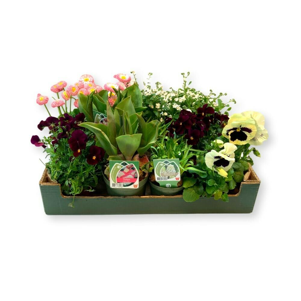 Frühlingsbox 'rosa'