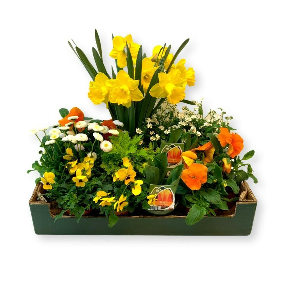 Frühlingsbox 'gelb'