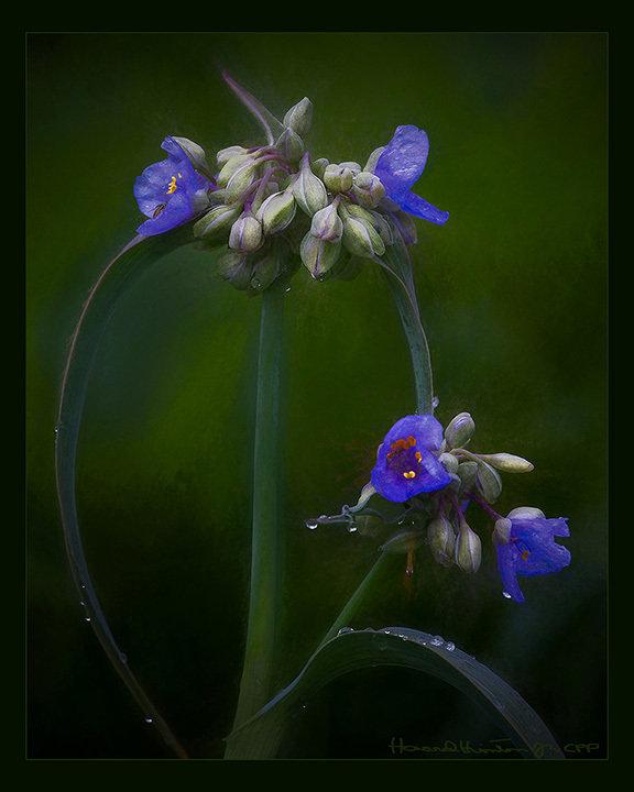 Fluorescent Flora